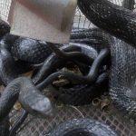 snake taps work