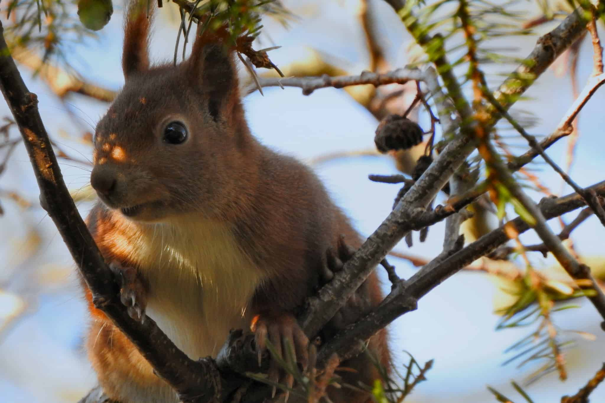 Winter Animal Removal Pest Control Services Opens Near Me